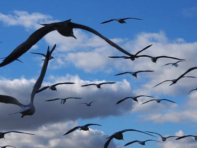 Birds by the Mississippi, La Crosse, Wisconsin